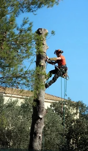 Elagage et abattage d'arbres avec GardenSKoncept
