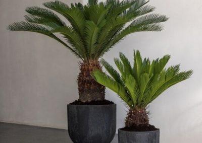 Pot palmier Pottery Pots