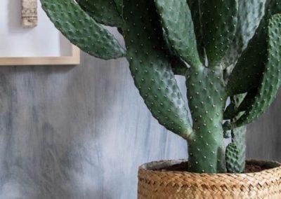 Pot panier cactus déco bohème