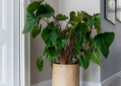 Pot plante bohème style panier Pottery Pots