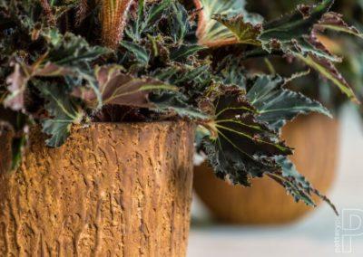 Pot plante Pottery pot terre