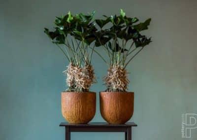 Pots plante exotique décoration Pottery Pots