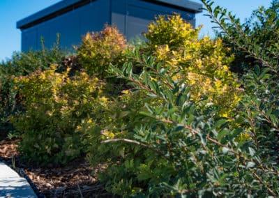Aménagement extérieur - Végétation