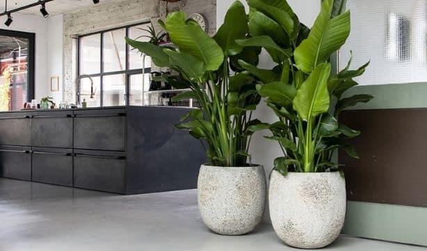 Pots de fleurs blancs - Décoration intérieure